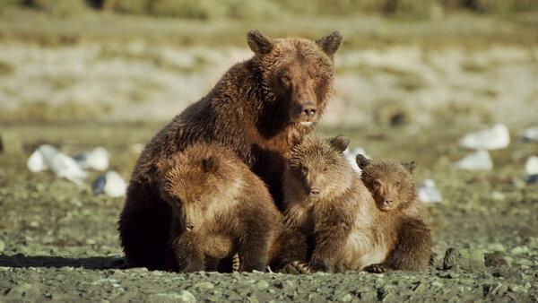 Seniorenkino - Der Bär in mir