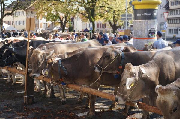 Viehschau Altstätten